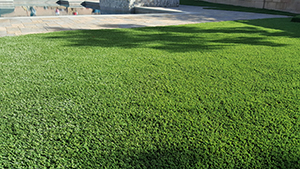 Genesis_Artificial_Turf_29_Diamond_Light_Fescue-Spring_ Diamond_Pro_Fescue-Spring_ Diamond_Supreme_Fescue-Spring_Everglade_Light_FescueSpring¬_ Everglade_Fescue-S